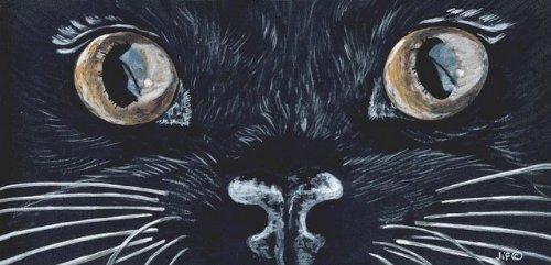 Occhi neri gatti Sign