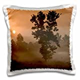 India - India, Kanha National Park, Morning sun 16x16 inch Pillow Case