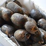 自然農法栽培 レンコン 無農薬 泥付き 2kg 佐賀県 白石産
