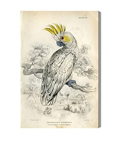 The Art Cabinet Sulphur Cockatoo Canvas Print