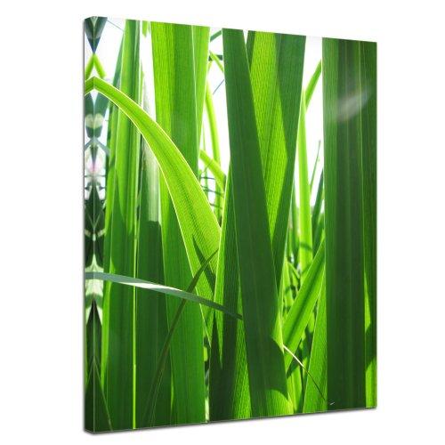 Bilderdepot24 Leinwandbild Gras - 50x70 cm 1 teilig - fertig gerahmt, direkt vom Hersteller