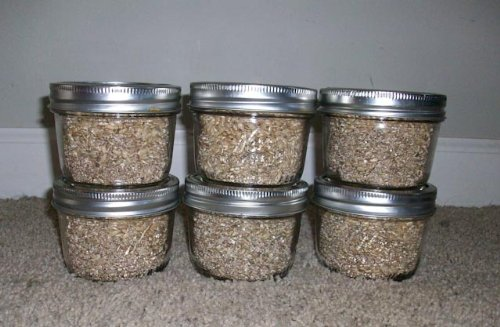 Brown Rice Flour&vermiculite Mushroom Substrate 12 Jars (1/4 Pint Jar) Mushroom Growing Kit (Brown Rice Flour And Vermiculite compare prices)