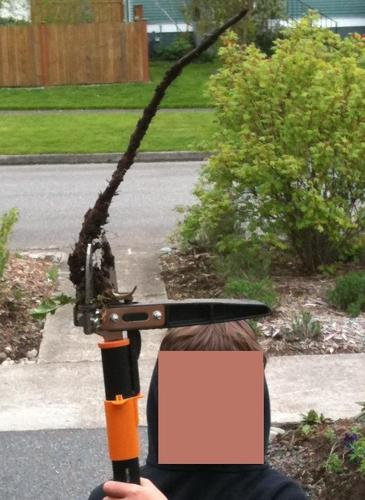Check Out This Fiskars 3 Claw Garden Weeder 7880