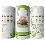 Teabloom Natural Flowering Tea - 12 Variety Blooming Teas in Gift Canister ***NEW FRESH PRODUCTION***