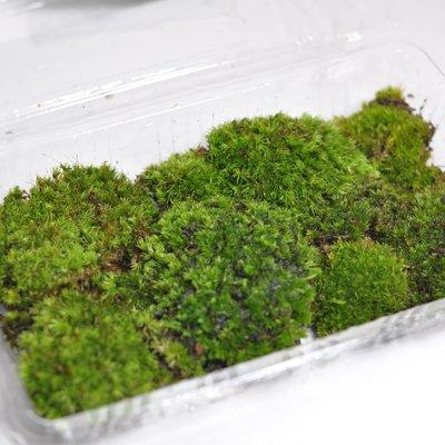 盆栽妙 山苔 1パック 盆栽用化粧に サイズ約18cm×11cm 4号鉢に敷き詰めて約2杯分