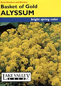 Lake Valley 3 Alyssum Basket Gold Seed Packet