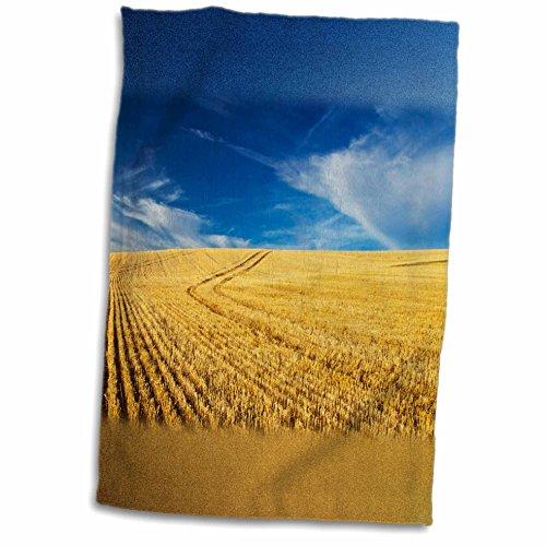 3dRose Danita Delimont - Farms - Farm Fields, Harvest Wheat, Palouse, Washington, USA - US48 TEG0425 - Terry Eggers - 12x18 Towel (twl_148727_1)
