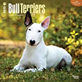 BT Bull Terriers 2015 Wall