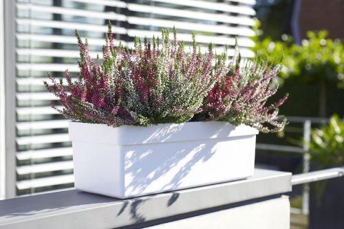 Blumenkasten EMSA City Balkonkasten 100 cm