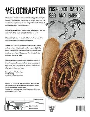 (DM 357) Velociraptor Egg with Embryo