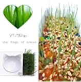 ViviPet Soil-Free Cat Grass VERSION II with Handmade Ceramic Pot (1000 seeds)