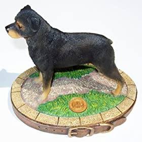 rottweiler AKC Show Dog