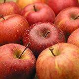 土作り名人山崎さんが作った長野産特別栽培サンふじりんご10kg(訳あり・ご家庭用) ランキングお取り寄せ