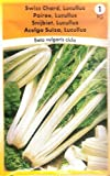 Swiss Chard Vegetable Seeds/Lucullus/Poiree/MULTI-BUY DISCOUNT/Leaves can be used like spinach & leaf stems like asparagus
