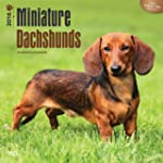 Miniature Dachshunds 2016 Square 12x1...