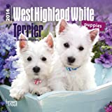 BrownTrout West Highland White Terrier Puppies 2014 Mini