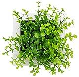 【KURUVARU】 壁掛け 3D インテリアフラワー 観葉植物 立体 アートグリーン (No1)