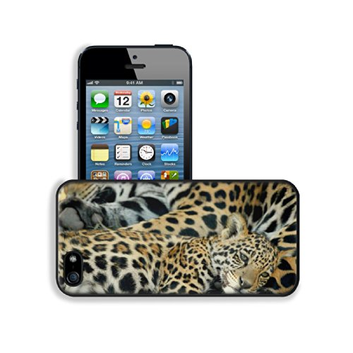 Animal Jaguar Baby Pattern Wildlife Sleeping Mother Spots Apple Iphone 5 / 5S Snap Cover Premium Leather Design Back Plate Case Customized Made To Order Support Ready 5 Inch (126Mm) X 2 3/8 Inch (61Mm) X 3/8 Inch (10Mm) Luxlady Iphone_5 5S Professional Ca front-895669