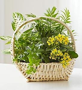 1800Flowers - Thinking of You Dish Garden - Medium