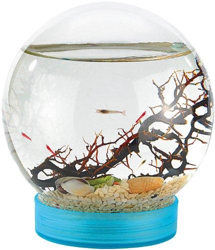 evivo-autarkes-okosystem-geschlossene-biosphare-mit-garnelen