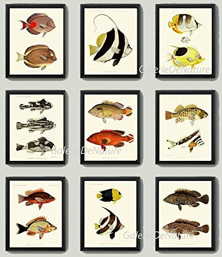 fish-print-set-of-9-antique-frd-beautiful-tropical-black-white-stripe-red-yellow-colorful-colored-il