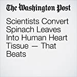 Scientists Convert Spinach Leaves Into Human Heart Tissue — That Beats | Ben Guarino
