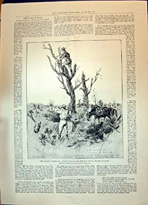Antique Print of 1896 Matabili Scouts Swinburne Burnham War Soldiers Lord Kelvin Lady Portrait
