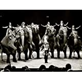 Elephants of Bertram Mills' Circus (Print On Demand)