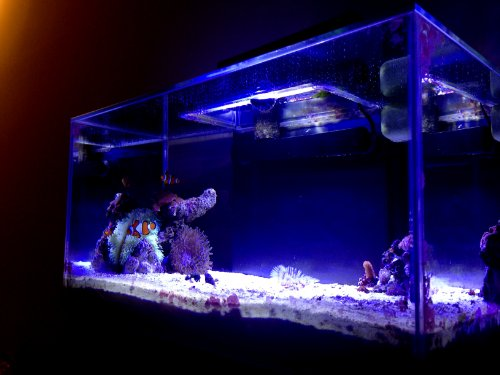 9 Watt Ultrabrite Reef Led System For Fluval Edge