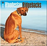 BrownTrout Publishers Ltd. Rhodesian Ridgebacks 2015 Wall Calendar