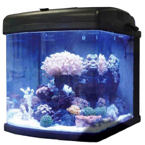 Jbj 28 gallon nano cube intermediate aquarium with led for Aquarium nano cube