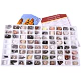 Introductory Earth Science Classroom Rocks and Minerals Collection, (13357)