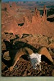 img - for Canyonlands: Wilderness of Rocks (10x13 Series) book / textbook / text book
