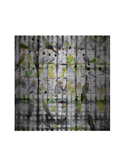 Parvez Taj Sunny Birds Aluminum Wall Art