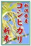 【新米19年産】田辺さん家の有機質肥料100%・低減農薬