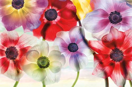 Vibrance by Harold Davis Floral Still Life Flowers Print Poster