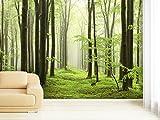 Fototapete Beech Forest in verschiedenen Größen - als...