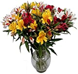 Peruvian Lilies - Fresh Cut Flowers - Single Bouquet - 25 Stems - Free Fast Shipping