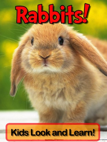 Rabbits! Learn About Rabbits and Enjoy Colorful Pictures - Look and Learn! (49+ Photos of Rabbits)