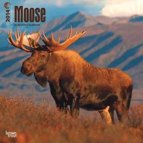 Moose 2014 Square 12x12