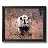 Black Rhinoceros Rhino Animal African Wildlife Wall Picture Black Framed Art Print
