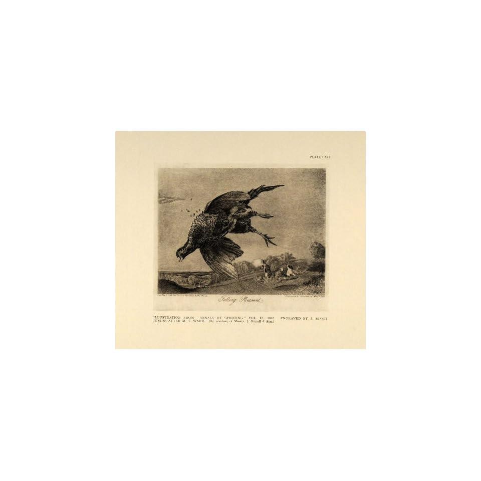 1924 Pheasant Hunting Shooting English Antique Print   Original Halftone Print
