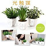 商品名: fleurmelody 光触媒 人工観葉植物 造花 3個セット ユーカリ2種 多肉 Ph-03-AB