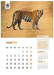 WWF-India Tiger Matters Wall Calendar