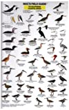 California-Coastal-Birds-Mac's-Guides-Flash-Cards