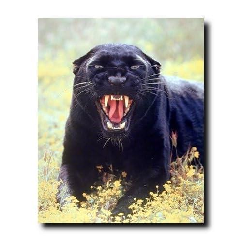 (Leopard) Wildlife Animal Art Print Poster (16x20): Posters & Prints