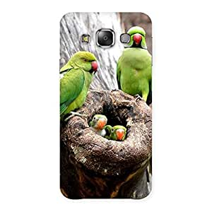 Gorgeous Parrot House Multicolor Back Case Cover for Galaxy E7