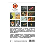 ZAPP Pack of 12 Postcards