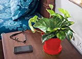 Rolling Nature Money Plant in Red Colorista Pot