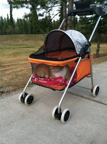 Best Pet Swanky Pet Stroller